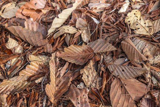 Bunter herbst gefallen blätter auf braunem waldbodenhintergrund.
