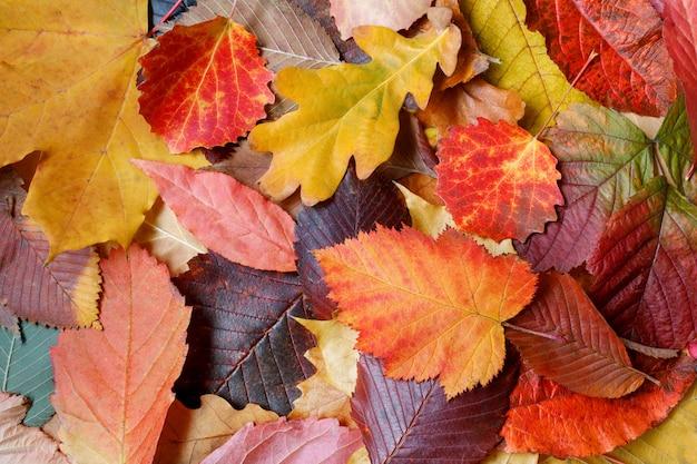 Bunter herbsthintergrund von den blättern von der verschiedenen baumart. das konzept der farbvielfalt.