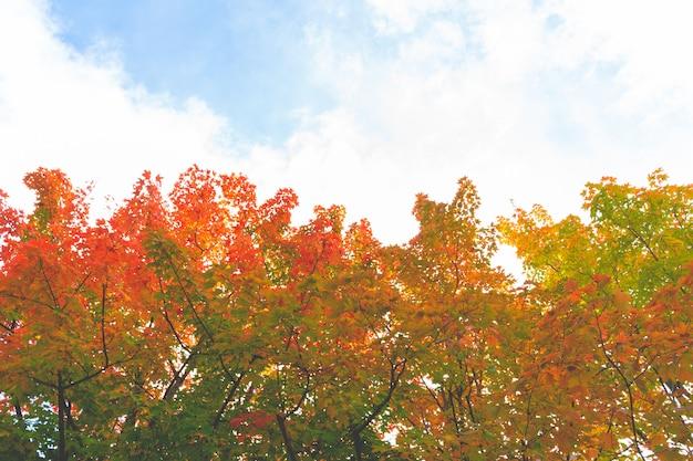 Bunter herbstlaub färbt änderung zum rot in japan.