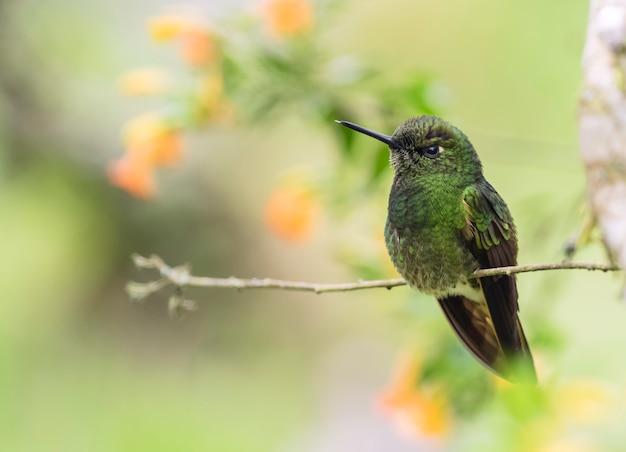 Bunter kolibri auf einer niederlassung