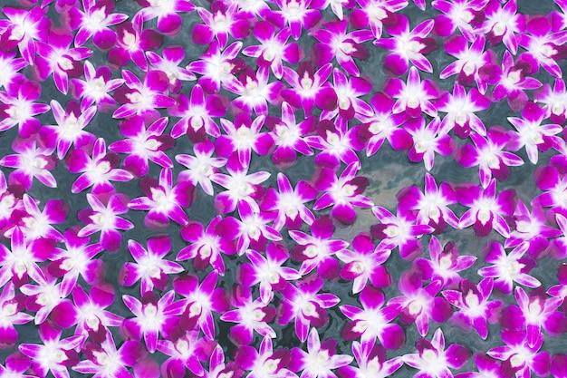 Bunter orchideenhintergrund