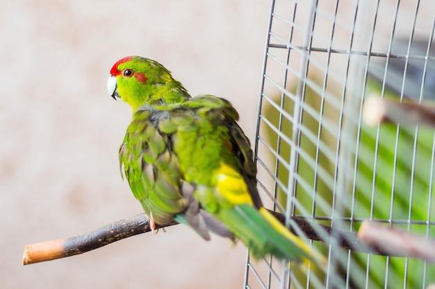 Bunter papagei flog aus dem käfig und genießt die freiheit