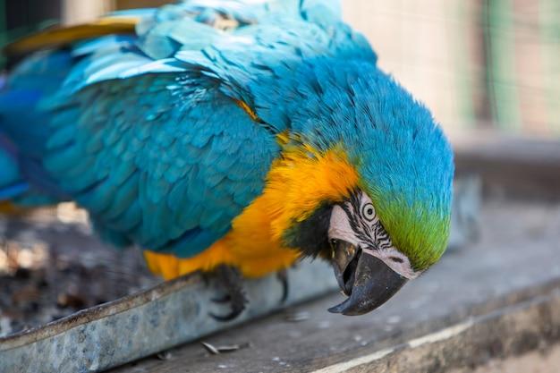 Bunter papagei in einem käfig an einem zoo.