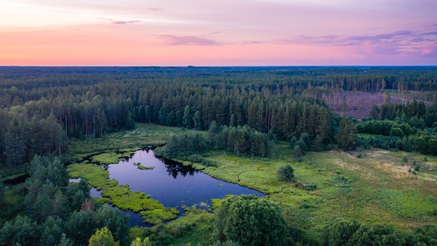 Bunter sonnenuntergang über den bäumen, abendlandschaft