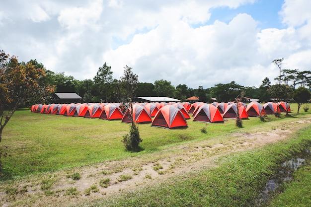 Bunter stand des campingzeltes in einer linie mit kiefer im bereichszelt