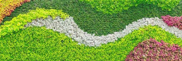 Bunter verschiedener blumenpflanzenwandhintergrund