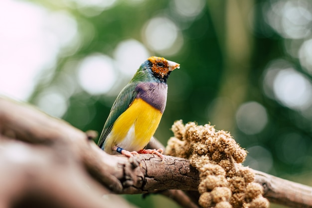 Bunter vogel auf einer niederlassung