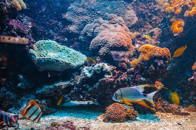 Buntes aquarium mit verschiedenen bunten schwimmenden fischen