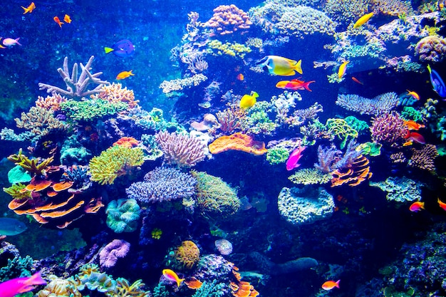 Buntes aquarium