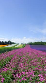 Buntes blumenfeld, naturhintergrund in japan