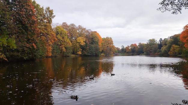 Buntes herbstlaub über see oder teich mit schönen bäumen in roter und gelber farbeidyllische szene