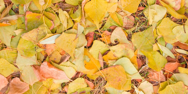 Buntes oberflächenbild des gefallenen herbstlaubs, goldene saisonale oberfläche
