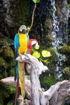 Buntes paar ara papageien, die auf zweig sitzen