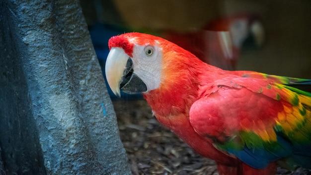 Buntes porträt des roten arapapageis des amazonas gegen dschungel. seitenansicht des wilden ara papageienkopfes. exotische tropische vögel aus wildtieren und regenwald als beliebte haustierrassen