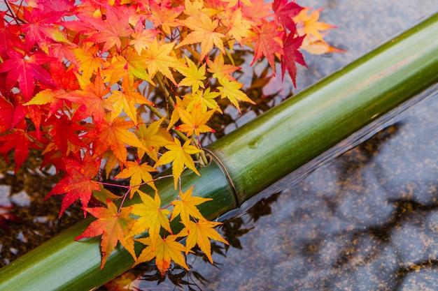 Buntes rotes und orange ahornblatt auf wasserteich mit grünem bambus im japanischen garten in der herbstsaison.