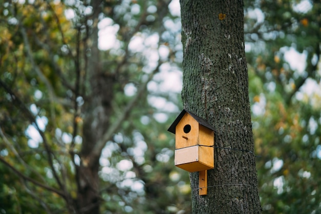 Buntes vogelhaus auf dem baum im park