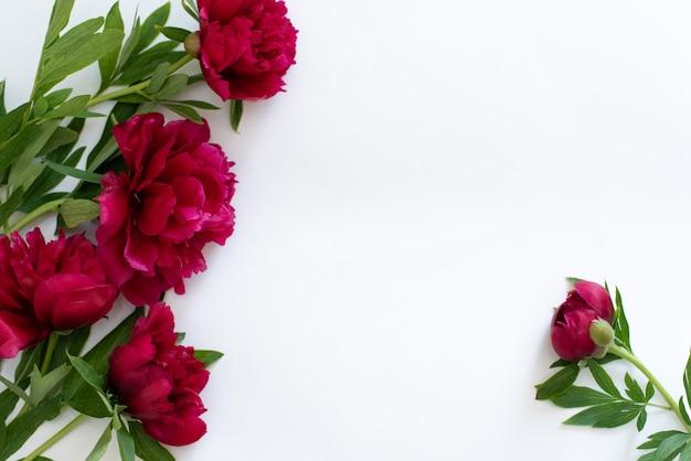 Burgunder-pfingstrosenblume lokalisiert