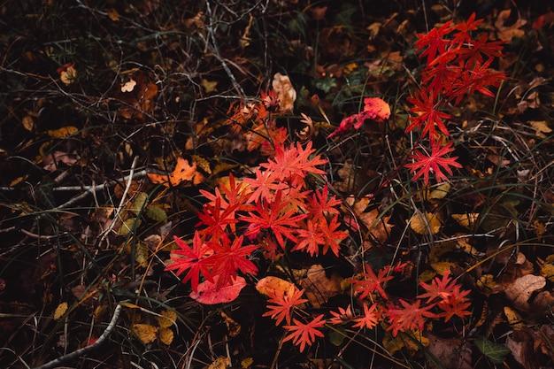 Busch mit roten blättern, erde