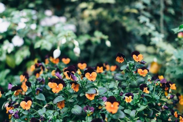 Busch mit vielen kleinen orangefarbenen blüten