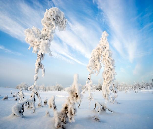 Bush trockener ivan-tee im frost auf hintergrund des himmels