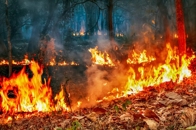 Bushfire-krise unter dem klimawandel