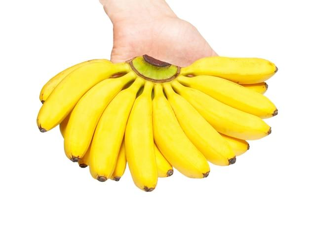 Butch von kleinen bananen in einer hand.