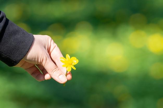 Butterblume in der hand, grüner hintergrund