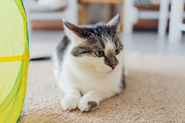Calico cat gerahmt und alarm in cat tunnel toy.
