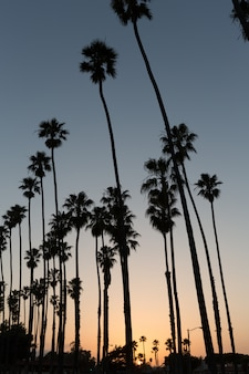California sunset palm-reihen in santa barbara