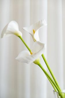 Calla lilie pflanzt blumen auf einem weißen stoffhintergrund.