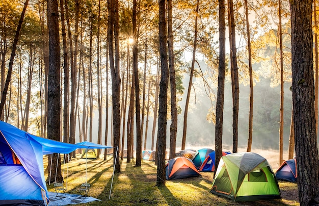 Camping und zelt unter dem kiefernwald nahe dem see mit schönem sonnenlicht am morgen
