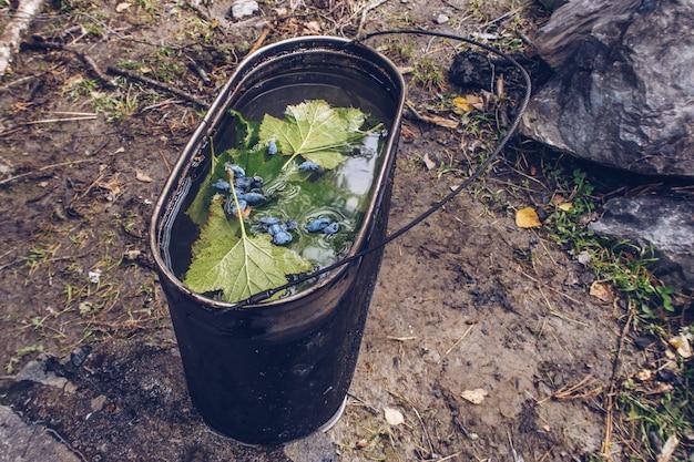 Campingtopf mit tee mit blauen geißblattbeeren und johannisbeerblättern. kräutertee authentische sommerküche im freien. leben auf dem land, trekkingtouren-routine