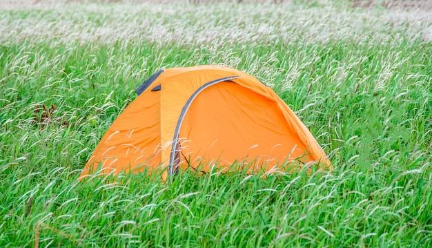 Campingzelt auf graswiesenlandschaftsgrünfeld