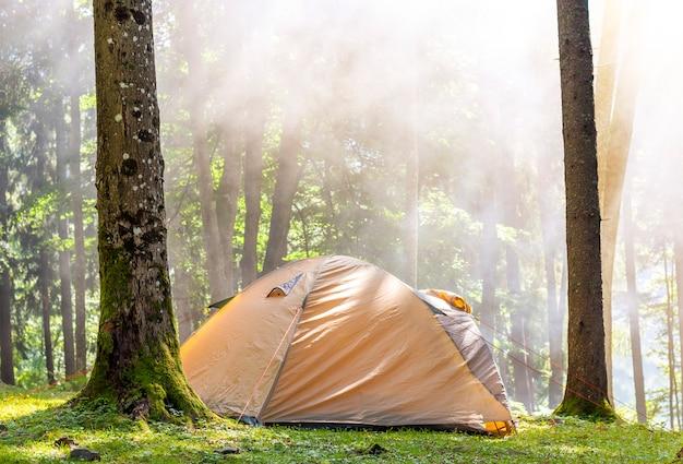 Campingzelt im grünen sonnigen morgen des waldes im frühjahr mit nebeldunst unter bäumen. erholungskonzept. weicher lichteffekt