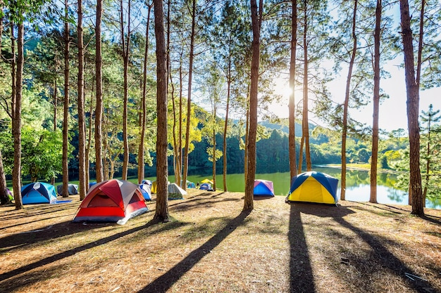 Campingzelte unter kiefern mit sonnenlicht am pang ung see, mae hong son in thailand.