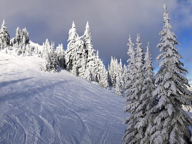 Canada columbia british sunpeaks bäumen kamloops