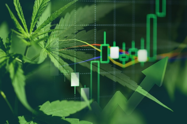 Cannabis-geschäft mit marihuana-blättern und aktiendiagrammen für investitionen in börsenhandelsanalysen, kommerzielle cannabis-medizingelder mit höherer wertfinanzierung und handelsgewinntrends