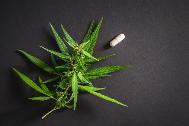 Cannabis-pflanzenzweig mit hohem cbd- und medizinischen pillengehalt