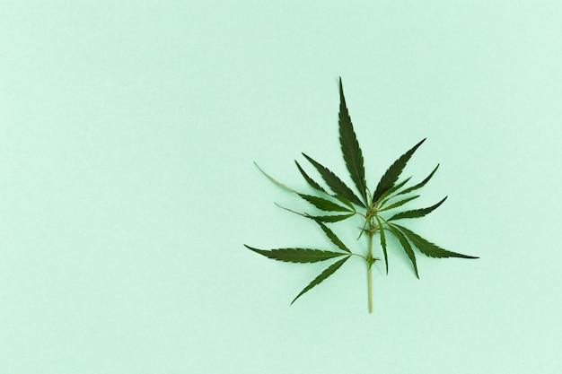 Cannabis-spross mit jungen blättern, grüne natürliche inhaltsstoffe für kosmetische produkte.