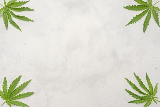 Cannabisblätter auf einem weißen hintergrund