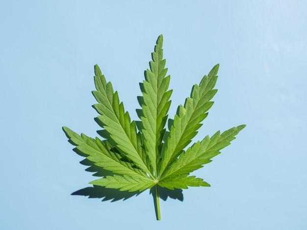 Cannabisblatt auf einem blauen hintergrund mit einem harten schatten
