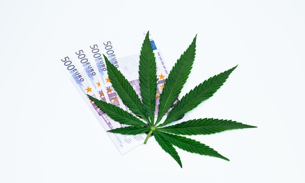 Cannabisblatt auf weißem hintergrund mit geld isoliert