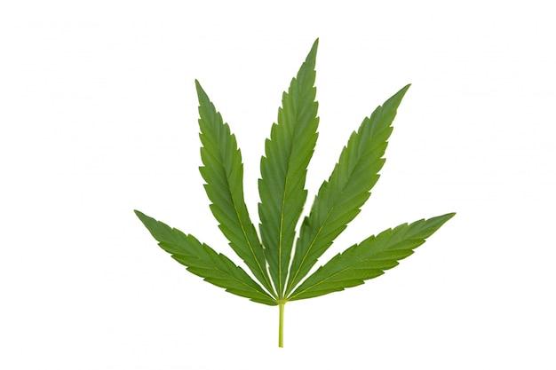 Cannabisblatt, marihuanablatt lokalisiert auf weiß