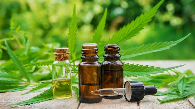 Cannabiskraut und blätter zur behandlung von bouillon, tinktur, extrakt, öl. selektiver fokus