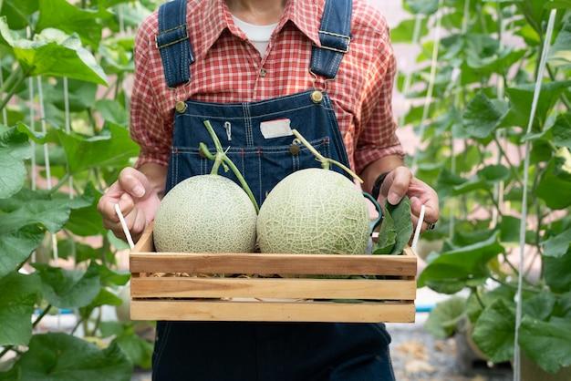 Cantaloupe-melonenpflanzen, die im gewächshaus wachsen und von melonennetzen getragen werden.