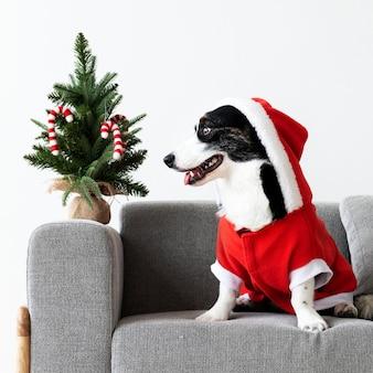 Cardigan welsh corgi in einem weihnachtskostüm