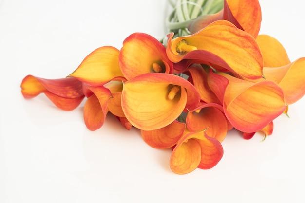 Cartucho naranja ramo