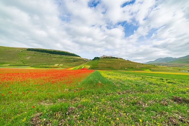 Castelluccio di norcia hochland, italien, blühende felder, touristische berühmte bunte blühende ebene im apennin. landwirtschaft von linsenernten und rotem mohn.