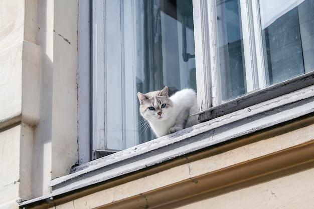Cat schaut aus dem alten fenster