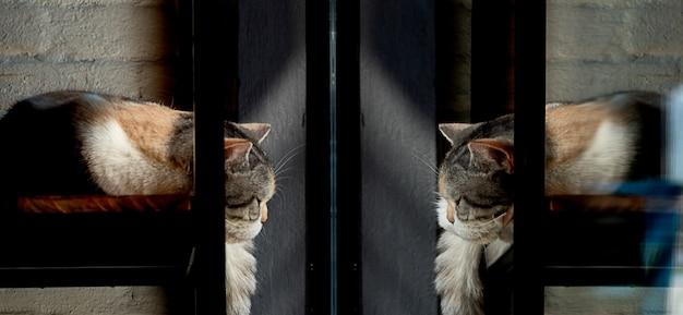 Cat schläft vor einem fenster und sieht an ihrem spiegelbild